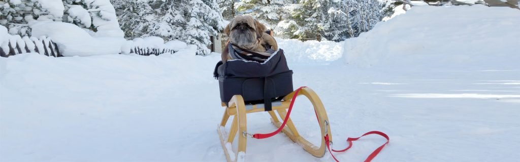 Hunde im Winter – Tipps & Tricks
