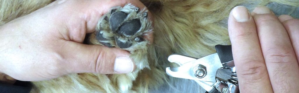 Hundekrallen schneiden